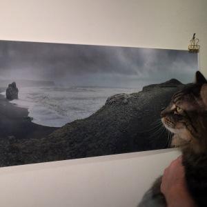 Oryx contemplates Dyrhólaey.