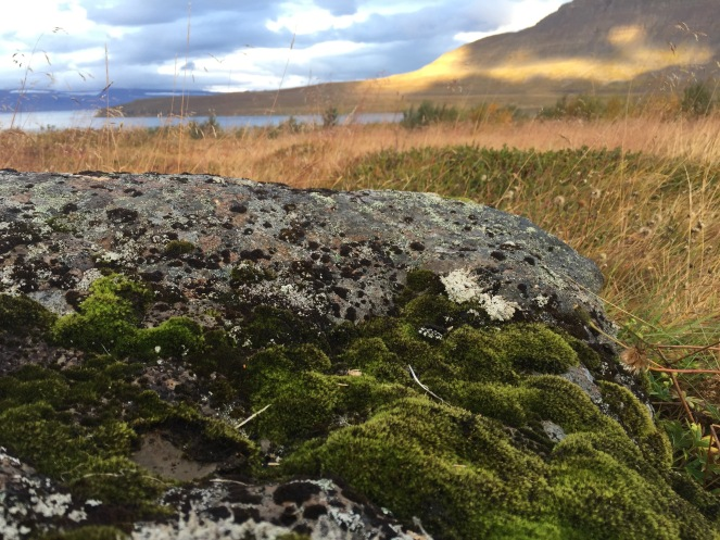 Elf stones are covered in lichen, moss, bilberries & crowberries
